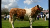 group winner No 175 which went on to be the overall winner pictured at the Balmoral Show