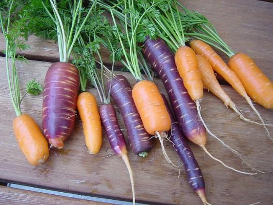 orange and purple carrots - from http://www.flickr.com/photos/satrina0/