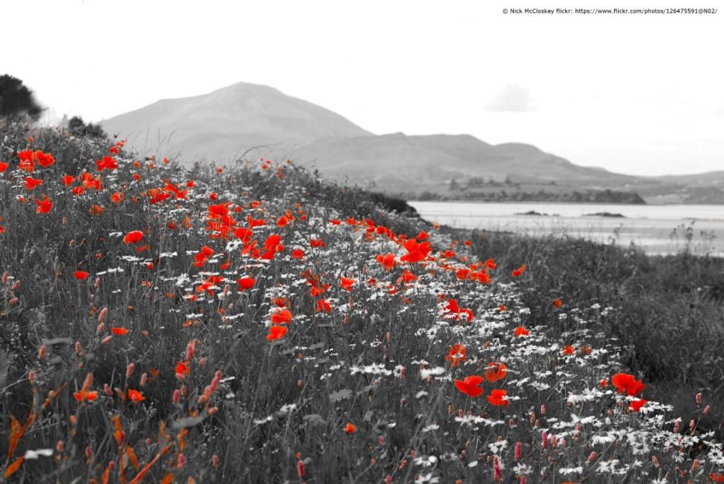 DSC_0685 ''Poppies and muckish'' (Medium)