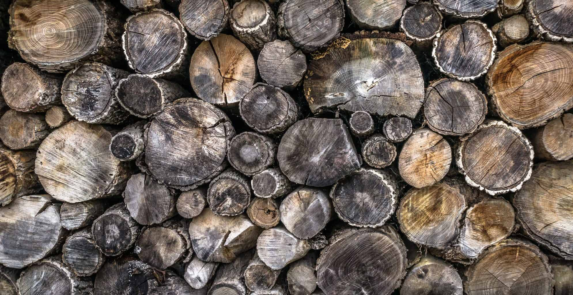 tree, log, firewood