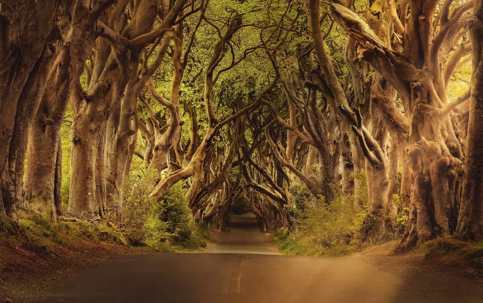 trees, avenue, road