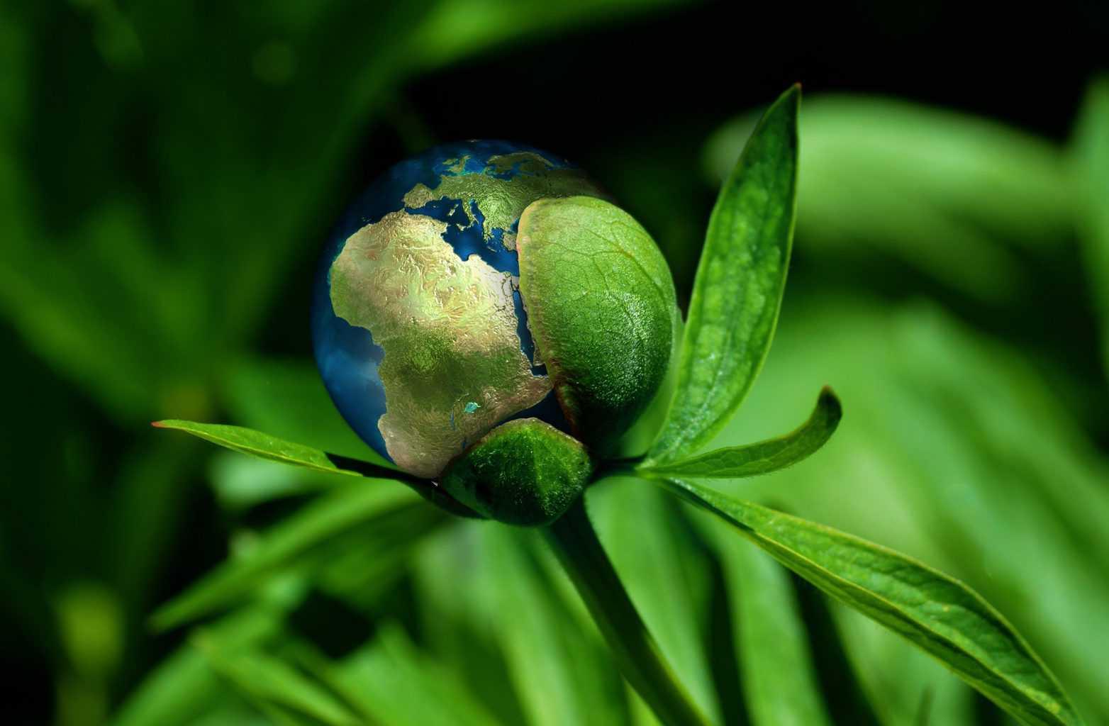 ecology, globe, concept